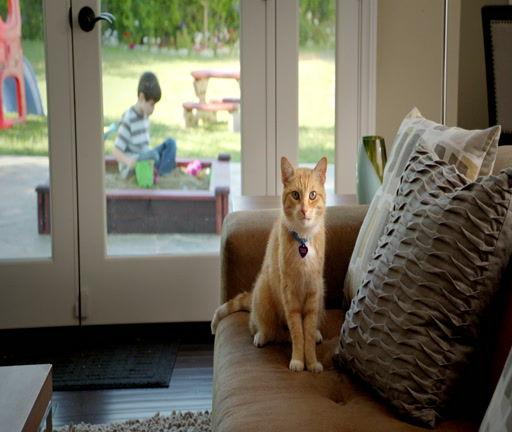 Shelter Pet Adoption